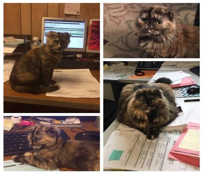 Have you met our office cat Lucy?