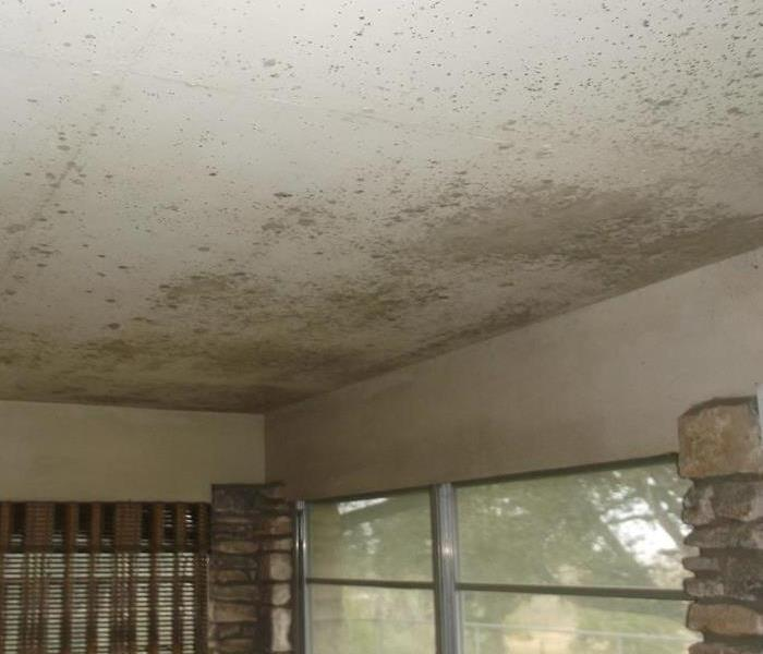 Mold Remediation 5 Signs You May Have Mold in the Home